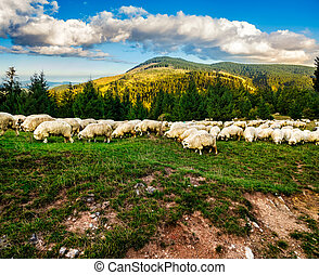 flock of sheep on the meadow near forest - Composite image...