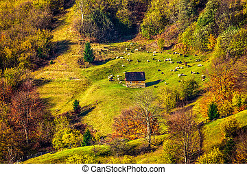 flock of sheep on the meadow near forest in mountains -...