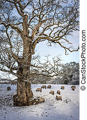 Flock of sheep under a tree on a snowy day in winter