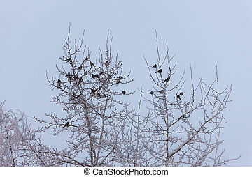 flock of snowbirds