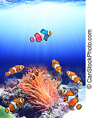 Flock of standard clownfish and one colorful fish - Concept...