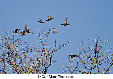 Flock of Starlings Flying Among the Trees