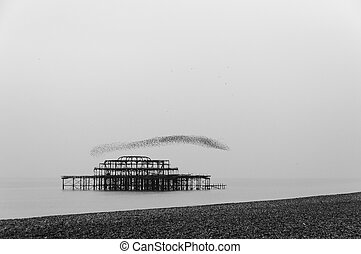Flock of starlings flying over the west pier in Brighton, UK