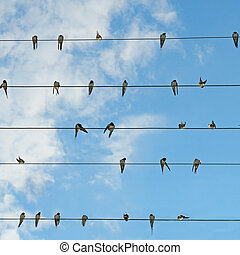 Flock of swallows on blue sky .