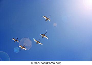 Flock of swans flying through blue sky. Beautiful birds in heaven