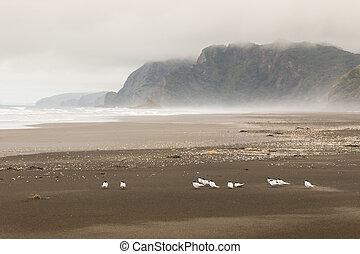 flock of terns resting on beach