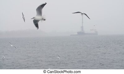 Flock of white birds flying over the seashore in foggy...