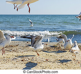 flock of white sea gulls on the sandy coast of the Black Sea
