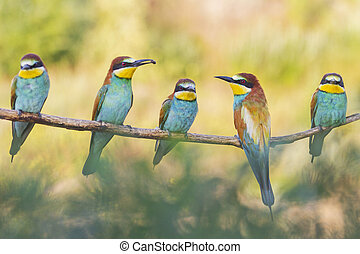 flock of wild beautiful colorful birds sitting on a branch