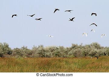 flock of wild birds in danube delta