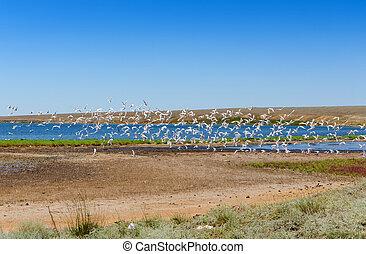 flock of wild birds on the lake