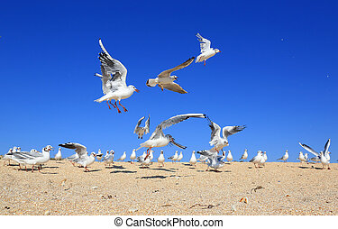 flock of young seagulls