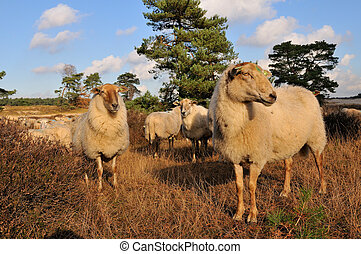 Flock with many sheep