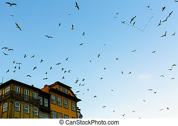 Flocks of seagulls over the old town roofs in Porto, Portugal.