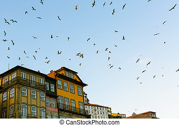 Flocks of seagulls over the roofs of the old town. Porto, Portugal.
