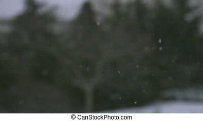flocons neige, neige, arbres, chutes, contre, fond, petit