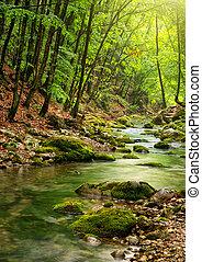 flod, djup, in, fjäll, skog