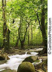 flod, grönt skog