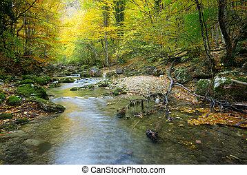 flod, in, höst skog
