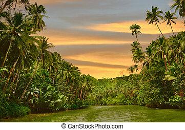 flod, solnedgang, rainforest