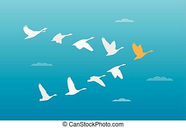flok, begreb, fugle, ledelse