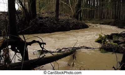 flood of a forest creek