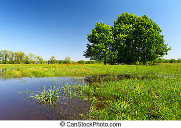 Flood on meadow with trees and grass