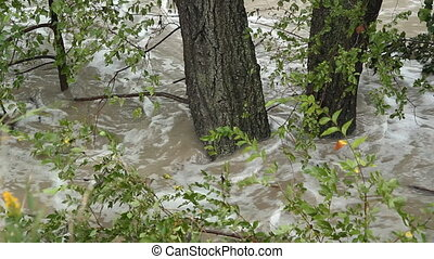 Flood river. Sunken trees.