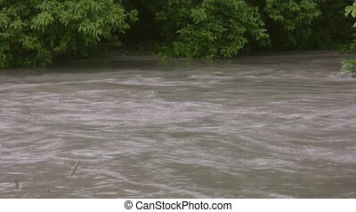 Flood river. Two shots of riverbank - Two shots of far...