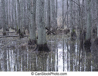 Flooded forest with reflection of bare tree trunks