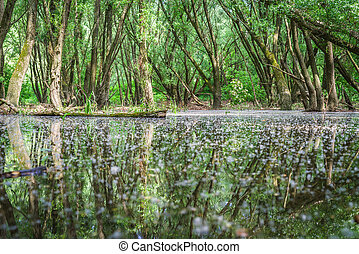 Flooded forests near river Danube,  Slovakia