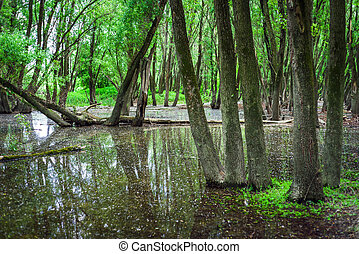 Flooded forests near river Danube, Slovakia - Trees in...