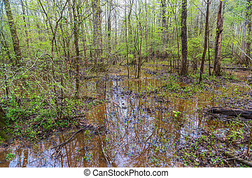 Flooded Lowlands in Forest