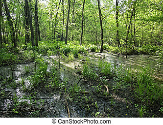 flooded part of the forest in spring