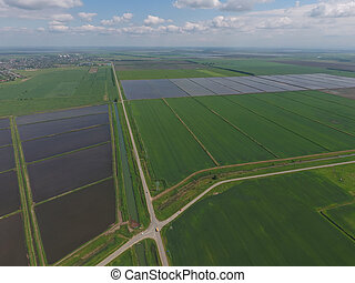Flooded rice paddies. Agronomic methods of growing rice in...