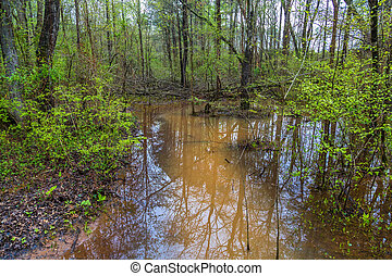 Flooded Stream in Forest