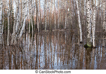 Flooded thicket at spring landscape