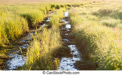 Flooded track in a meadow