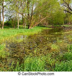 Flooded Wetland - Illinois