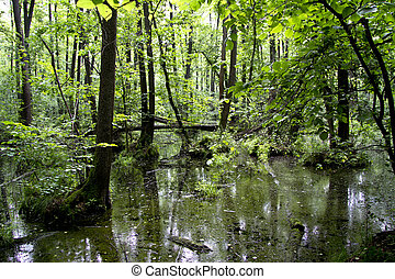 Floodplain forest, alder summer day.