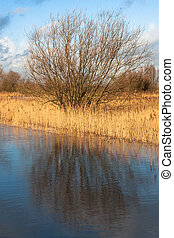Floodplain with reed and banks against cloudy blue sky