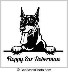 Floppy Ear Doberman - Peeking Dogs - breed face head...