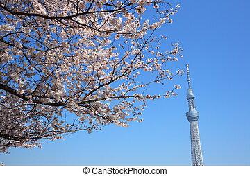 flor, árbol, cielo, cereza, tokio