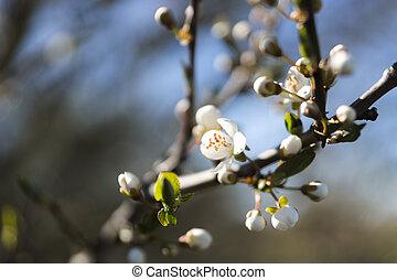 flor, árvore fruta