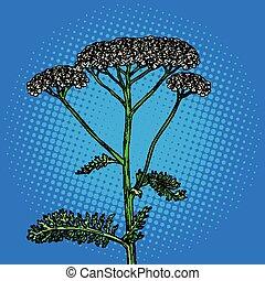 flor, achillea, milenrama, medicinal, millefolium, milfoil,...