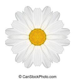 flor, aislado, caleidoscópico, margarita, blanco, mandala