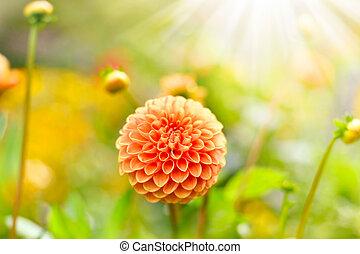 flor alaranjada, com, espaço cópia