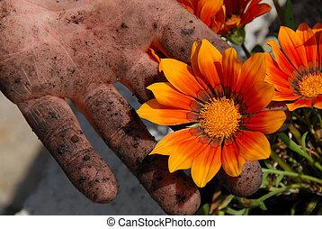 flor alaranjada, em, jardim, em, sujo, ha