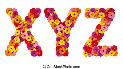 flor, alfabeto, -, isolado, carta y, x, branca, z
