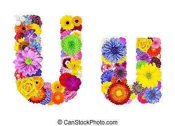 flor, alfabeto, -, isolado, u, letra, branca
